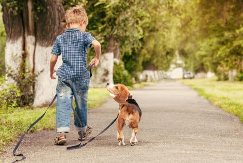little boy walking beagle puppy
