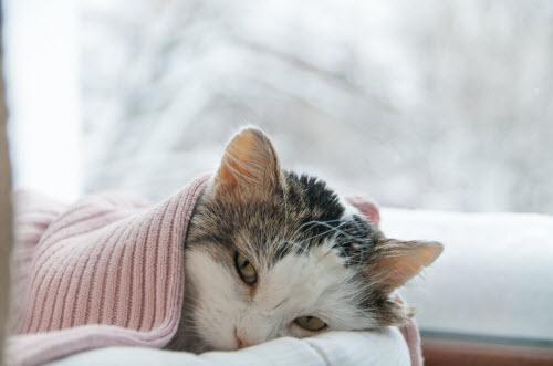 Cat lies on the window