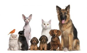 group of pets; dogs, cats, and rabbits