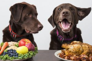 two dogs with plates in front of them, one chicken and one vegetables