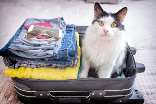 Cat sitting in the suitcase or bag and waiting for a trip