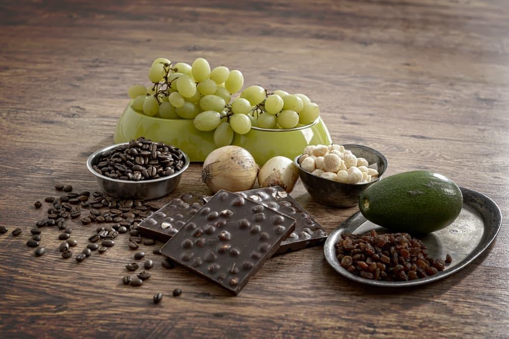 grapes, chocolate, raisins, coffee, avocado toxic to pets