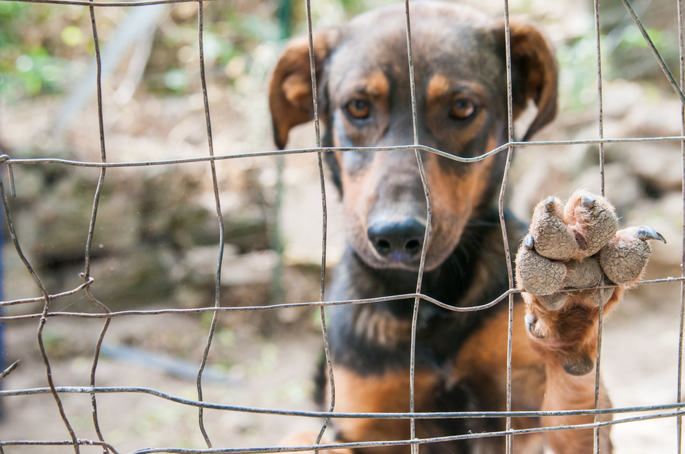 Close up view of the of a stray dog's paw behind the corral of a dog refuge